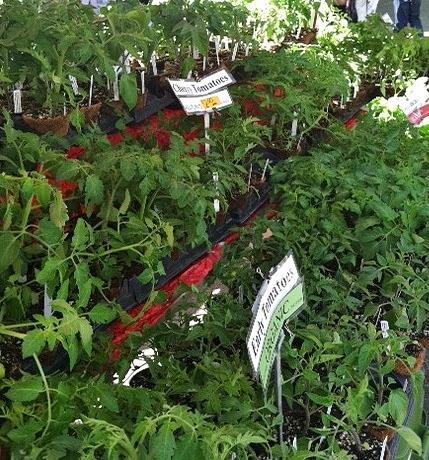 Vegetable Starters