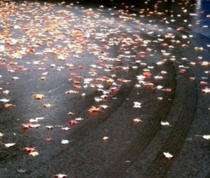 leaves on wet road - cropped